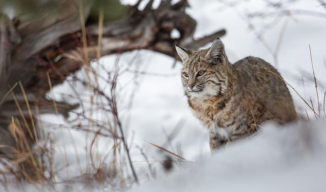 5 Surprising Countries for unforgettable European Wildlife Holidays.